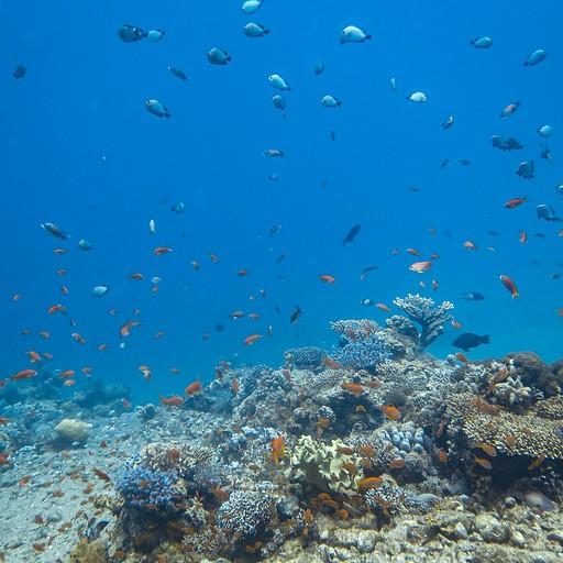 אחת משוניות האלמוגים הרבות שראינו. ב'בלו הול' לצערי לא הצלחתי לצלם, אך דמיינו כאילו לקחנו את התמונה הזו וסובבנו ב-90 מעלות
