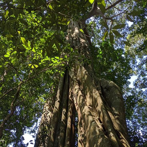 בבת אחת ממקדש מתוייר האווירה מתחלפת ואתם מוקפים ביער גדול