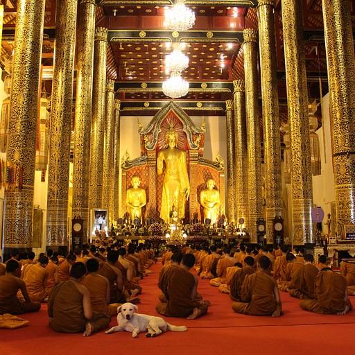 אורח ב-  Wat chedi luang