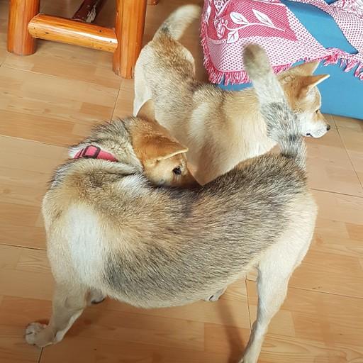 הכלבים של ההוסטל משחקים