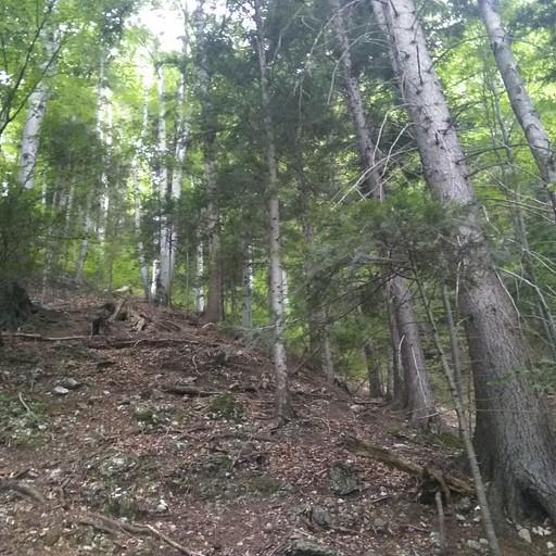 מסלול צהוב מבוטורוג, דרך היער