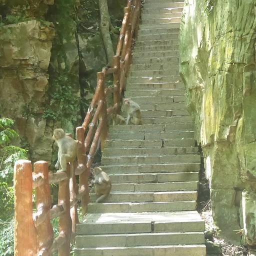 הקופים שחיכו לנו במדרגות