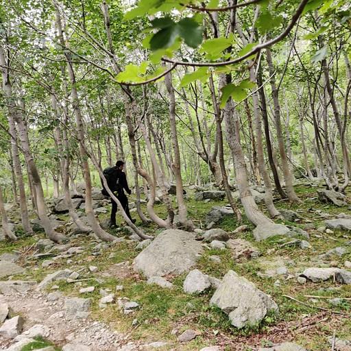 יער מהמם בסוף הירידה של מקטע 9