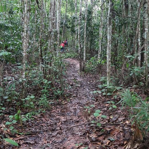 הדרך ביער