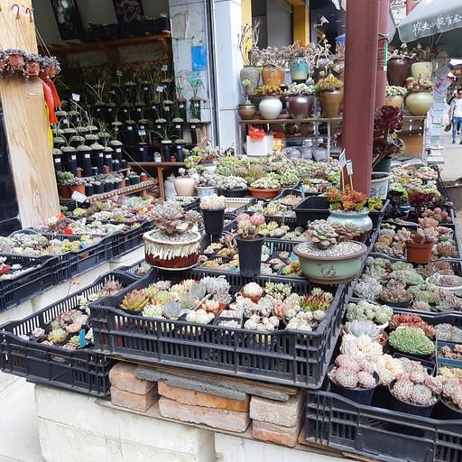 שוק פרחים בעיר- כמה דוכנים עם סוקולנטים