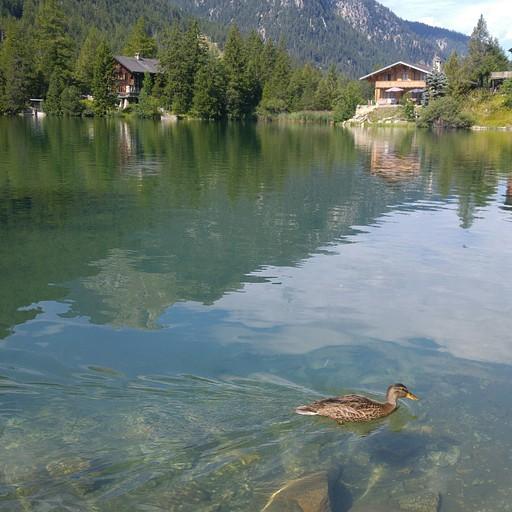 האגם בשמפה. אפשר להכנס ולשחות.