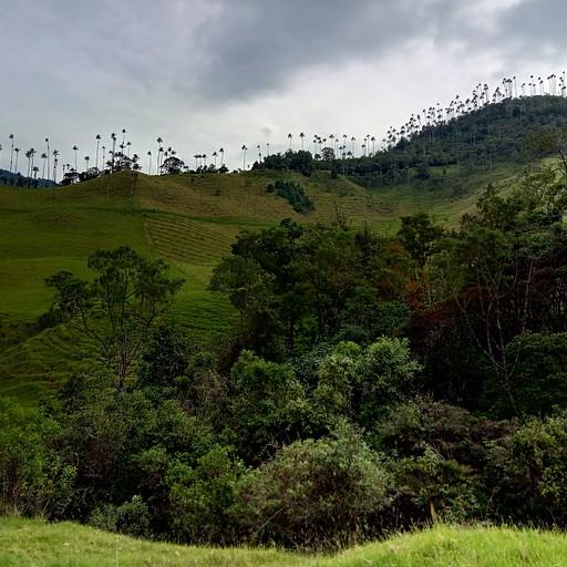 נוף של הדקלים מעל העמק בתחילת המסלול