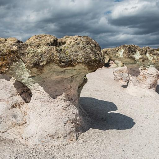 פטריות אבן