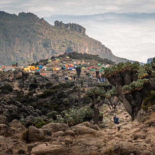 נופים ממאדים, צמחים משונים ועיר אוהלים רחבת ידיים