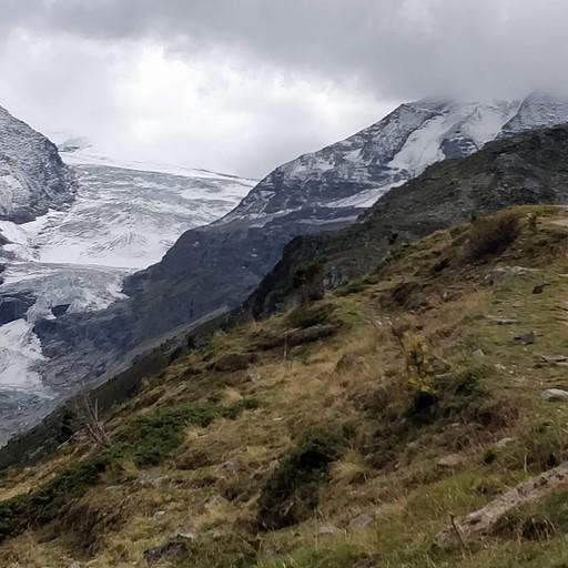 קרחון הוויסהורן