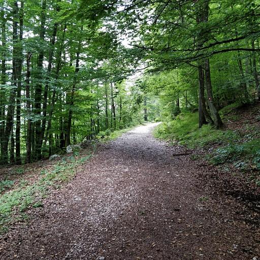 הליכה ביער צמוד לנחל