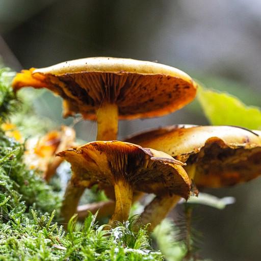המון סוגי פטריות יער