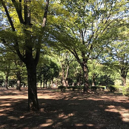 פארק יויוגי