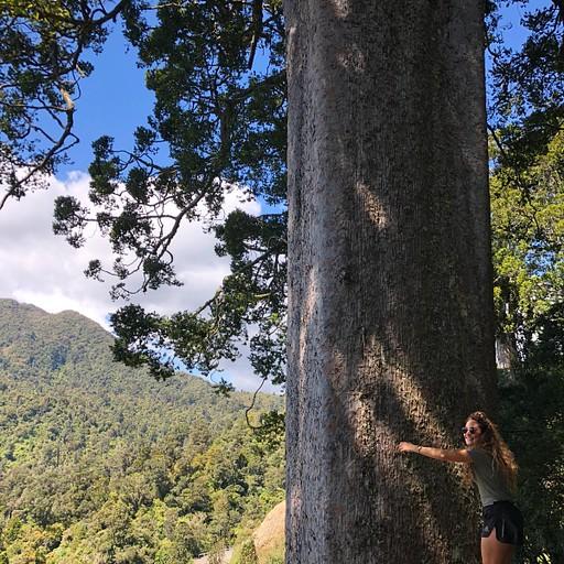 square kauri walk