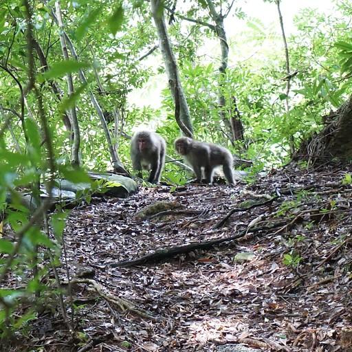 קופים בדרך למפל ג'אנוקוצ'י