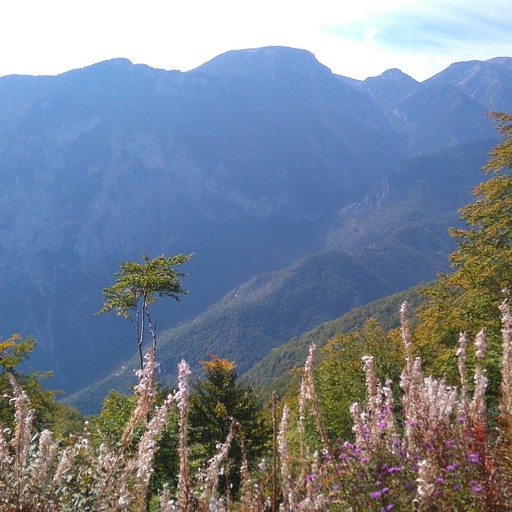 הנוף והצמחייה קרוב לנקדות הדאייה