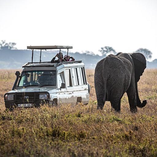 פיל ורכב, פתאום מבינים שהם כמעט באותו הגודל