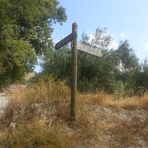 וחלפתי ליד השלט הזה. ההליכה לאורך שביל בטון, עם מלא גפנים וכמה תאנים לאורכו, באזור שטחים חקלאיים של משפחות שגרות שם.