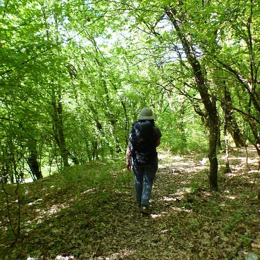 הליכה בחורש מקפסובו לכיוון הויקוס