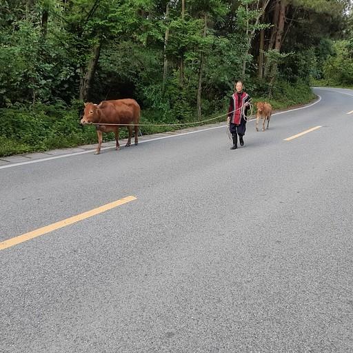 הצטרפו אלינו להליכה על הכביש...