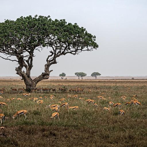 המוני עדרי חיות בכל מקום