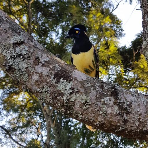 ציפורים זה יותר מעניין ממה שחושבים