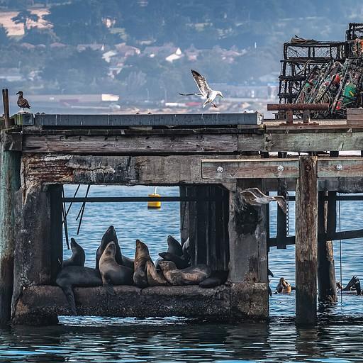אריות ים ושחפים בכל פינה