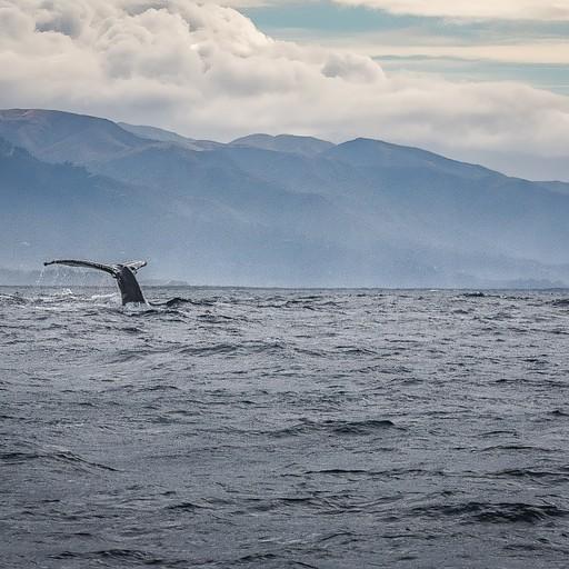 לווייתן ראשון מציץ את זנבו מהמים