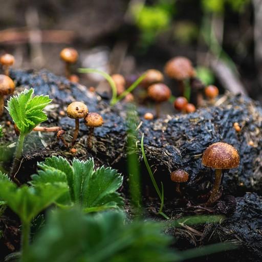 """היער תמיד מוליד הזדמנויות לתמונת """"פטריות אחרי הגשם"""" טובה"""