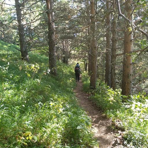 הירידה ביער לכיוון המנזר