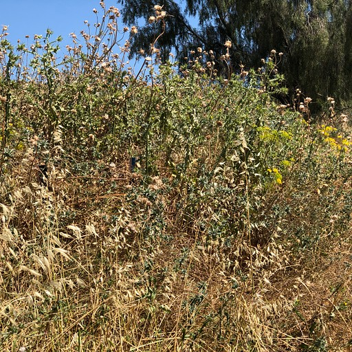 דוגמא לסימונים שקשה למצוא, צולם באיזור טבריה. (קליק להגדלה)