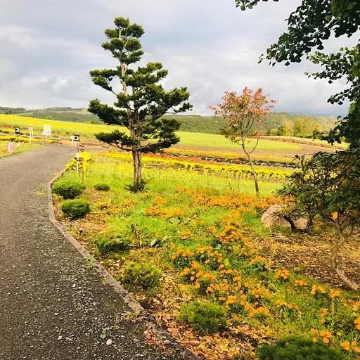 שדה הפרחים הקטן שמצאנו על הדרך