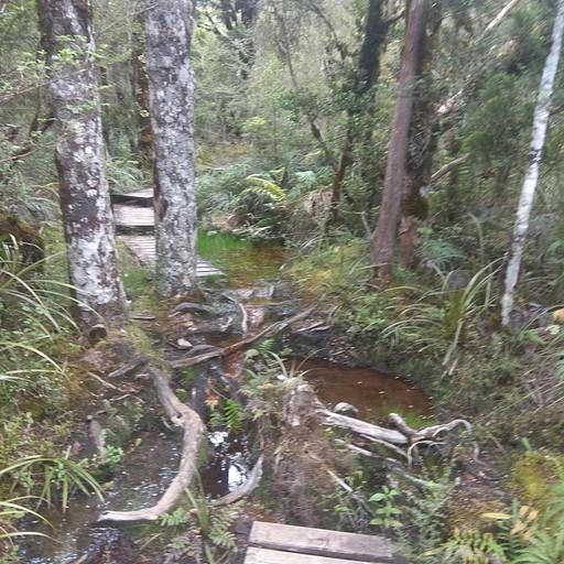 יער אופייני לאי הצפוני