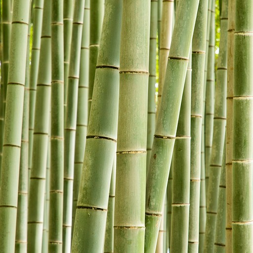 יער הבמבוקים