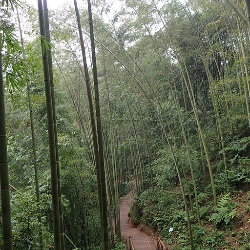 השביל מ-Guanyun Pavillion ל- Wangyou Valley