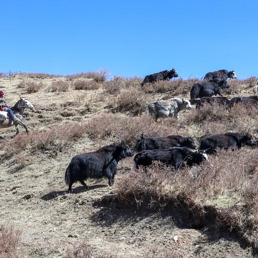 הנופים בטיול סוסים בלנגמוסה