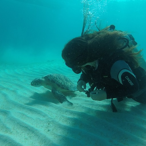 שוחה עם צב ים באחת הצלילות בריזורט