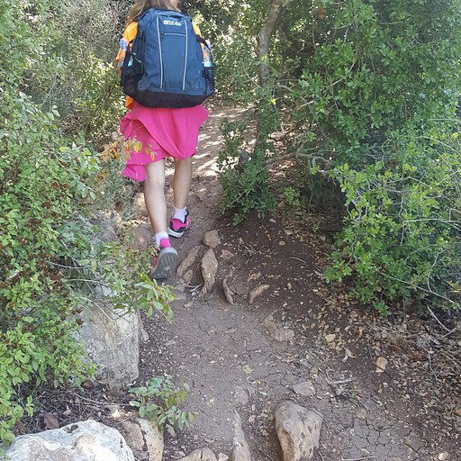 עולים להר מירון
