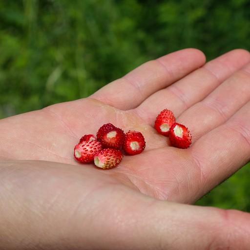 בייבי תותי בר מדהימים שנמצאים בדרך! טעם מדהים!