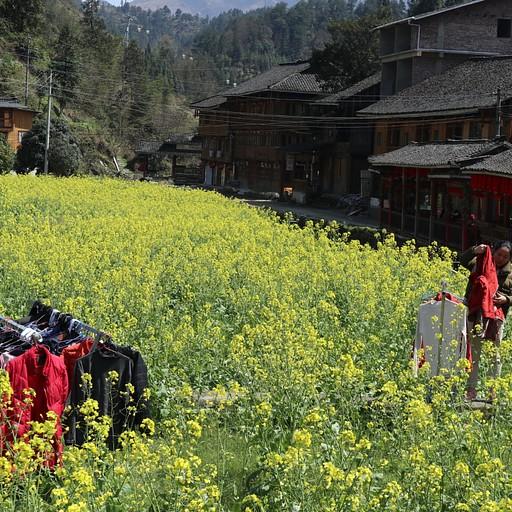 כביסה בריח פרחים, בכפר pingan