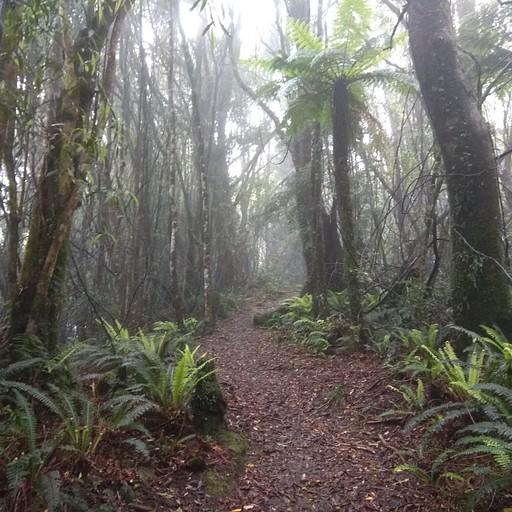 נוף טרופי בtararuas הגשומים