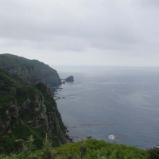 באי טאורי