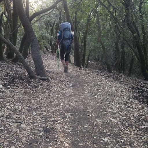 מפסגת הר מירון יורדים ביער אלונים כשעה וחצי עד לחניון לילה חירבת חממא.